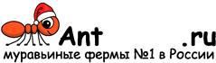 Муравьиные фермы AntFarms.ru - Сочи